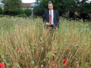 Cllr Julian Bell in poppy field at Perivale Park
